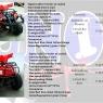 ATV (All-Terrain Vehicle) P45K